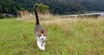 もふもふされにきた猫