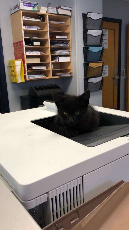 オフィスの子猫