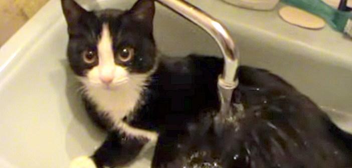 お風呂好きの猫さん