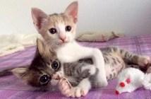 弟を包み込む姉猫