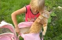 赤ちゃんになりきる猫