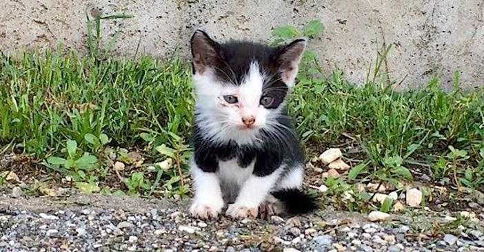 交差点で保護された子猫