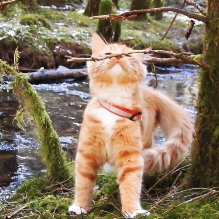 森の中の子猫