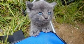釣りの途中に現れた子猫
