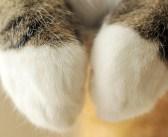 可愛いだけじゃない! とっても器用な猫さんの前足は、こんな使い方もできちゃいます ( *´艸`)♡