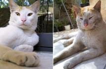 妹猫と兄猫