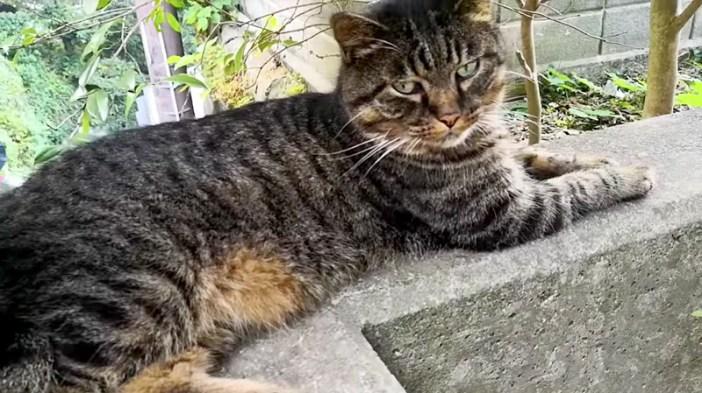 出会った猫