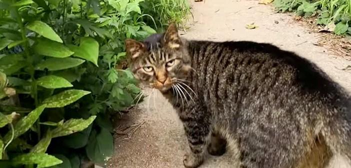 近道を案内してくれる猫