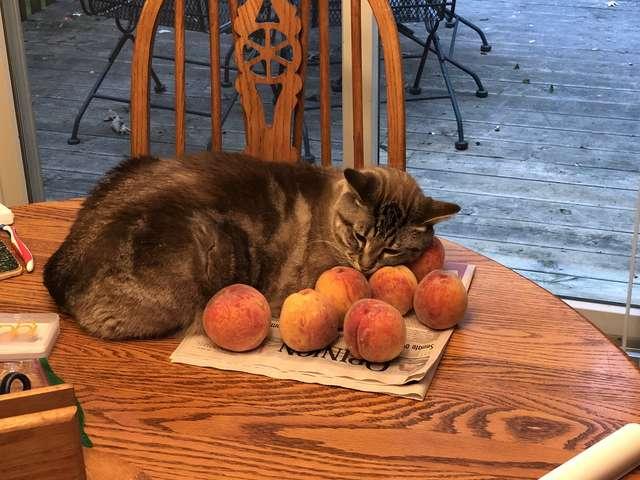 桃で寝る猫