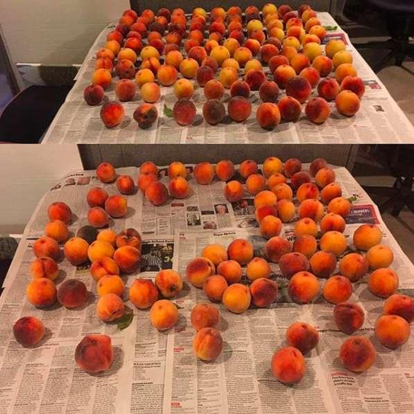 たくさんの桃