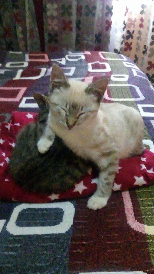 猫とオポッサム