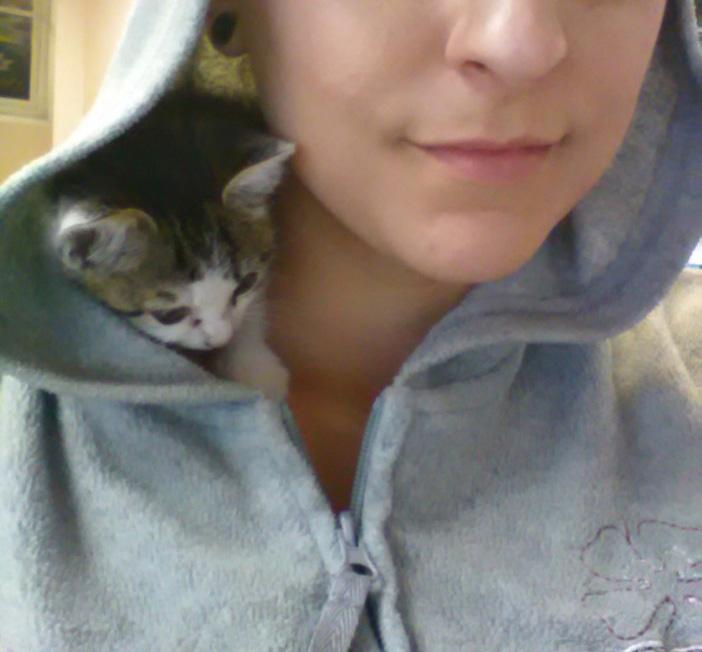 パーカー子猫