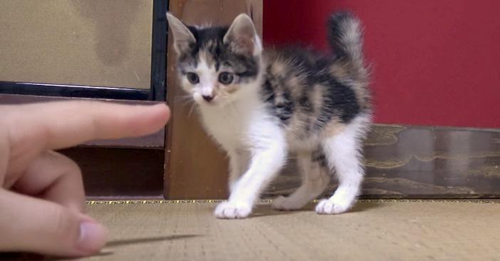 側溝から救い出された子猫