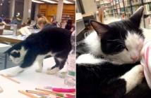 大学に通う猫