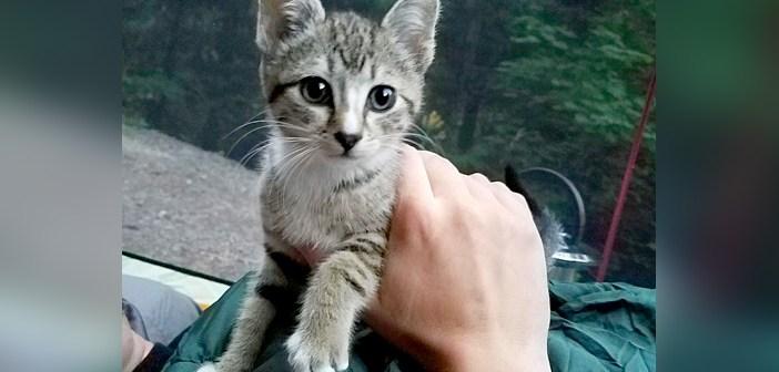 キャンプに現れた子猫