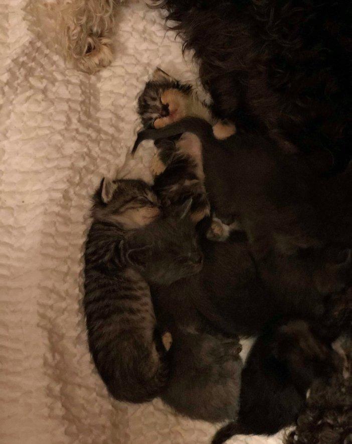 固まる子猫