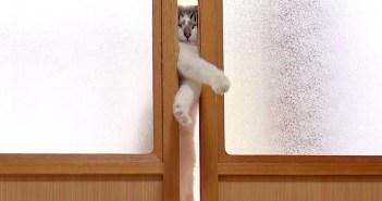 引き戸を開ける猫