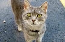 ゴミ捨て場で見つけた猫