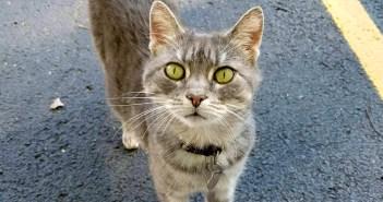 職場近くのゴミ捨て場で猫を見つけた男性。6年間、車の中で猫を眠らせ、毎日世話を続けると… 猫の心に大きな変化が!