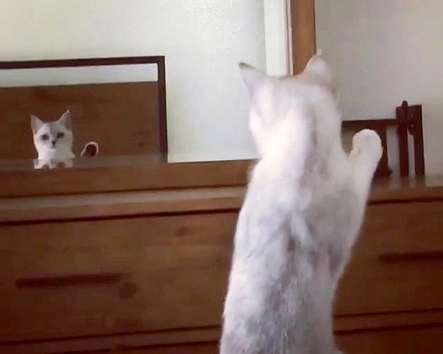 耳の存在に気づいた猫
