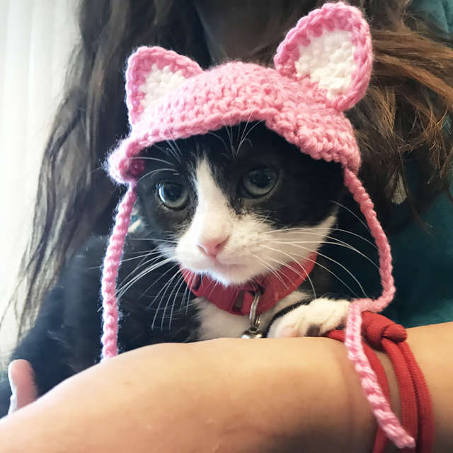 耳を作ってもらった猫