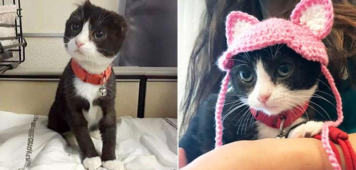 耳を失った状態で保護施設に運ばれてきた子猫。施設のスタッフが子猫のために新しい耳を作り、温かい家族を見つける