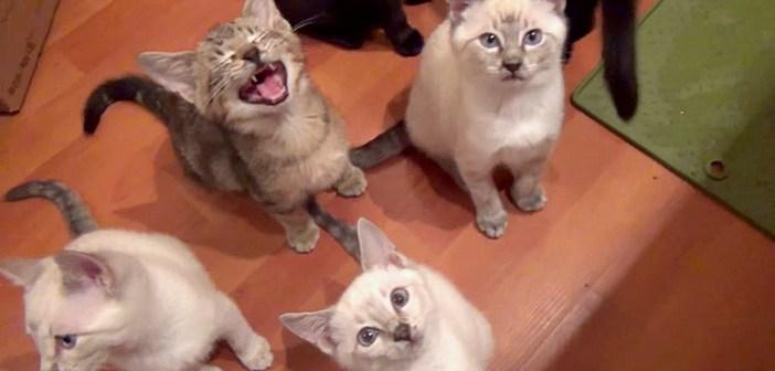 ご飯が食べたい子猫達