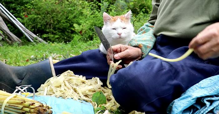 フキの皮むきを見つめる猫