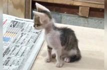 痩せ細った子猫