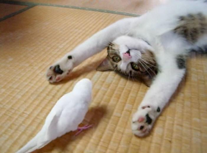 インコとじゃれる猫