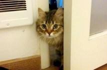 覗いてきた猫