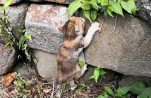 溝に落ちた子猫