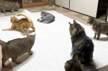 寝る前に遊ぶ猫達