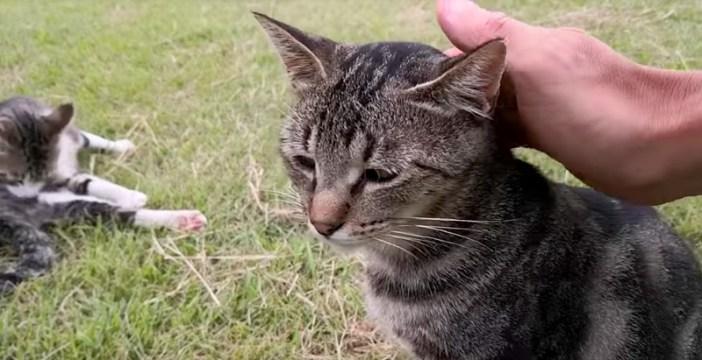 撫でさせてくれる猫