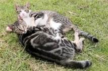 芝生の上の猫