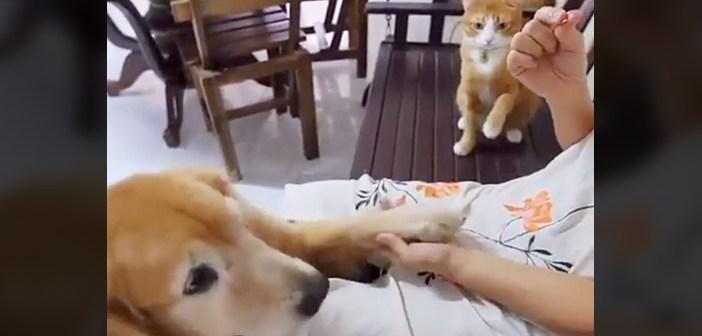 犬を真似る猫