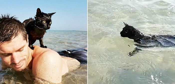 幼い頃に優しい夫婦に引き取られた保護猫。ある日、砂浜に連れて行くと、誰もが驚くほどの海好きに!