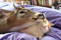 トナカイと猫
