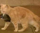 「さぁ、一緒に帰りましょうね」子ウサギも子猫も分け隔てなく育てる母猫の姿に、心がポカポカ温まる (*´ω`*)♡