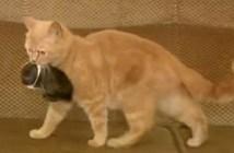 ウサギと母猫