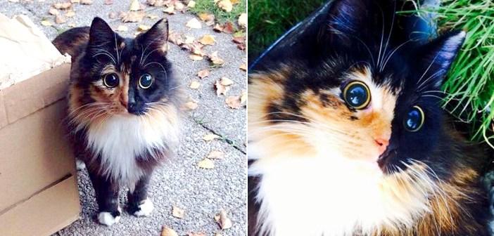 まん丸の目の猫