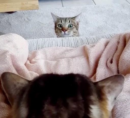 のぞいて来る猫