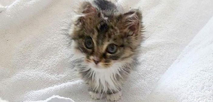 家事の中から助け出された子猫