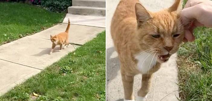 毎朝やってくる猫