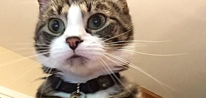 写真に映った猫