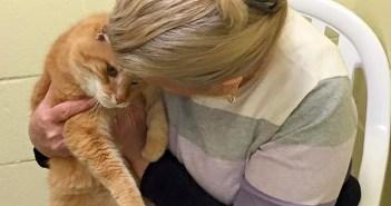 ある日、保護施設から1匹の猫を引き取った女性。猫の幼馴染を救い出すため、再び施設へと戻る