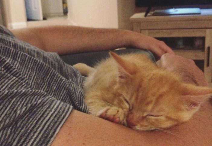 抱っこする子猫