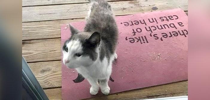 冷たい雨の中、庭先までついてきた猫。ドアを引っ掻く音に気づいた女性が招き入れると、幸せいっぱいの姿を見せてくれた