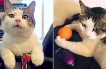 看護師になった猫
