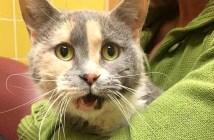 トイレが使えない猫